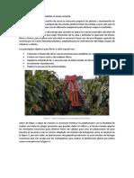 Necesidades de La Mecanización en La Precosecha, Cosecha y Post Cosecha de cacao