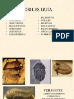 fosiles principales