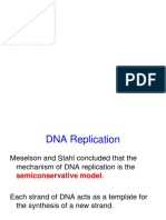 Dna Replication (Prok and Euk)