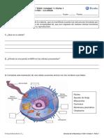 Bruño 2º ESO actividades.pdf