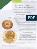 01. LA DIVISION CELULAR.pdf