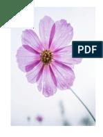 bunga.docx