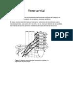 233720708-Plexo-Cervical.docx