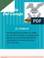 Etologia Del Conejo