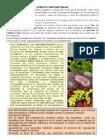 Hongos y Micobacterias