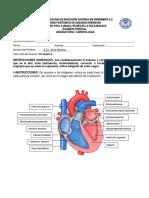 Examen Modulo Cardio Respuestas