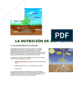 La Nutrición de Las Plantas