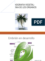 1. Organografia Vegetal. Ontogenia