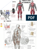 Deadlift Workouts