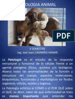 Introduccion a la patologia veterinaria