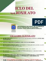 T1 CICLO DEL GLIOXILATO,GLUCONEOGÉNESIS Y VIA DE LAS PENTOSAS P.pdf
