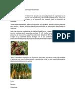 Las Agriculturas Departamentos de Guatemala GORDO