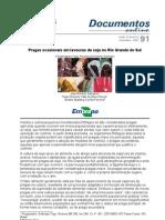 Pragas ocasionais em lavouras de soja no Rio Grande do Sul.pdf