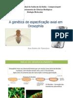 343o Axial Em Drosophila