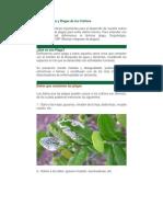 Plagas y Enfermedades de Los Cultivos