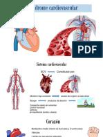Síndrome Cardiovascular Sangre (1)