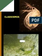 Crustaceos Cladoceros