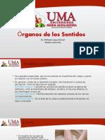 7. Organos de Los Sentidos
