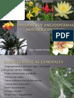 5.1division Xvii Angiospermas (Magnoliophytas) 2018