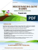 ppt camote
