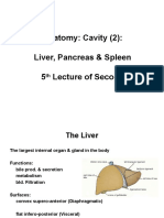 Anatomy, Lecture 11, Abdominal Cavity 2