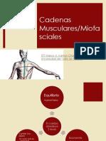 Cadenasmusculares 150411110848 Conversion Gate01 (1)