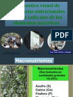 Nutricion de La Plantade Cafe