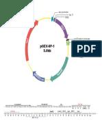 pGEX-6P-1.pdf