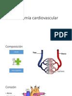 4. Anatomía cardiovascular.pptx.pptx
