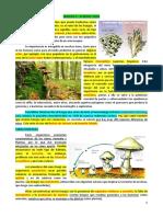 Semana 6 I Bimestre - El Reino Fungi
