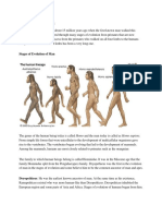 Stages of Evolution of Man