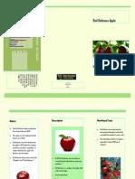 Claudia Silva Apple Brochure
