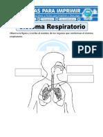 Ficha de Sistema Respiratorio Para Primaria