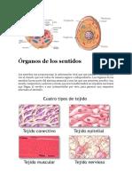 organos de los sentidos