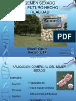 05-AlfredoCastro.pdf