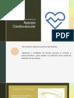 10. Desarrollo Aparato Cardiovascular