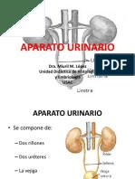 25_aparato_urinario