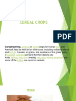Cereal Crops. for Midterm