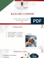 Zootecnia Razas de Animales de Pastoreo