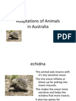 Adaptations of Animals in Australia ppt