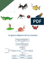 Sistema Digestivo en Animales