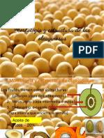 Morfología y Estructura de Oleaginosas