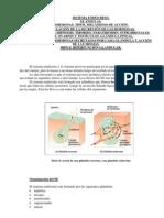 1-Unidad10-Sistema endocrino