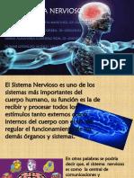 Exposicion, Sistema Nervioso