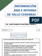 c7 Conformacic3b3n Externa e Interna Del Tallo Cerebral