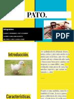 Exposición Pato