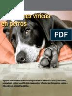 Infecciones en Perros
