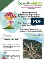 17 Microorganismos Potenciales Lbbmx