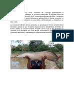 monografia de pescado.docx