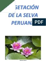 Vegetacion de La Selva 1
